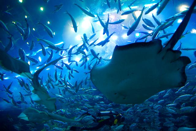 ドバイ水族館.jpg